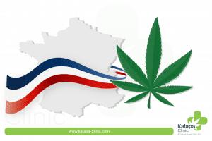 Comment produire du CBD en France?